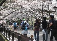 夙川公園を行く2